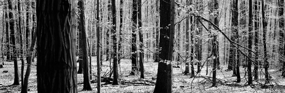 trees2koliba_bratislava